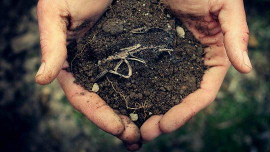 Як проходять прозорі торги землею